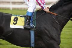 Race horse and jockey ready to run Royalty Free Stock Image