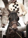 Race horse and jockey ready to run Royalty Free Stock Photo