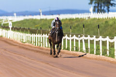 Race Horse Jockey Sand  Stock Photo