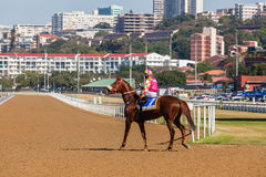 Race Horse Jockey Track Stock Photos