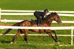 Race Horse Jockey Training Run Track Royalty Free Stock Images