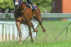 Race Horse Running Legs Hoofs Track Close Up. Race horse running action close up animal bodies legs hoofs pounding on grass track royalty free stock photography