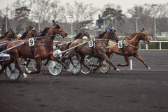Race horses. At the hippodrome in dark colors Stock Photography