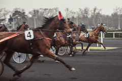 Race horses Stock Photo