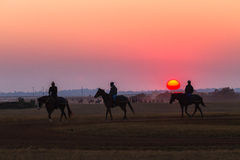 Race Horses Grooms Jockeys Training Dawn Royalty Free Stock Photo