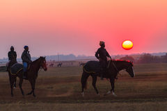 Race Horses Grooms Jockeys Training Dawn Stock Photo