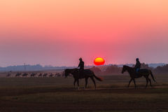 Race Horses Grooms Jockeys Training Dawn Stock Photography