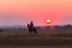 Race Horses Grooms Jockeys Training Dawn Stock Images