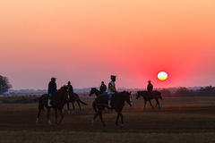 Race Horses Grooms Jockeys Training Dawn Stock Images