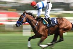 Race Horses Royalty Free Stock Photos
