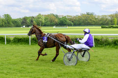 Race horses on the Partynice track. Royalty Free Stock Photo