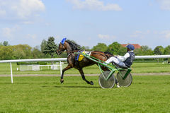 Race horses on the Partynice track. Stock Photos