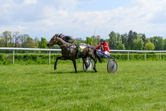 Race horses on the Partynice track. Stock Image