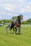 Race horses on the Partynice track. Royalty Free Stock Images