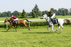 Race horses on the Partynice track. Stock Photography