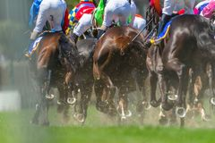 Horse Racing Legs Hoofs. Race horses racing pounding grass track rear photo of legs hoofs metal shoes of animals Royalty Free Stock Image