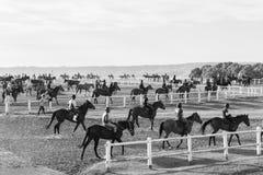 Race Horses Riders Training Black White. Race horses riders jockeys morning training on track in black white vintage landscape Royalty Free Stock Photography