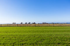 Race Horses Riders Training Landscape Royalty Free Stock Images