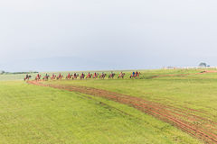 Race Horses Riders Training Landscape Stock Images