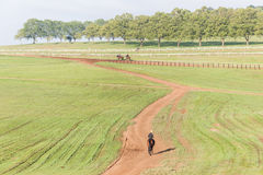 Race Horses Riders Training Landscape Stock Photo