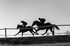 Race Horses Running Black White. Race horses jockeys training running track action morning silhouetted black and white landscape Stock Image