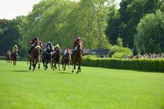 Race horses Stock Image