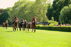 Race horses Stock Image