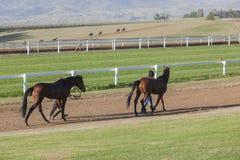 Race Horses Stables Landscape Stock Image