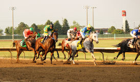 Race Horses. Thoroughbreds racing at Prairie Meadows in Iowa royalty free stock images