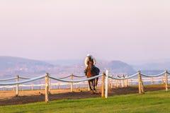 Race Horses Training Dawn Royalty Free Stock Photography