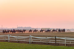 Race Horses Training Dawn Royalty Free Stock Photos