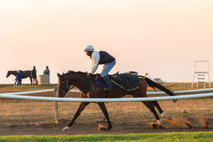 Race Horses Training Dawn Stock Photo
