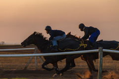 Race Horses Training Dawn Royalty Free Stock Photo