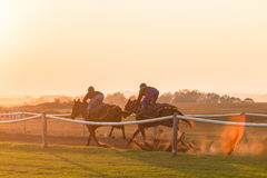 Race Horses Training Dawn Stock Images