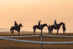 Race Horses Training Dawn Royalty Free Stock Image