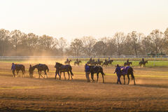 Race Horses Training Dawn Stock Image