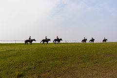 Race Horses Training Royalty Free Stock Photography