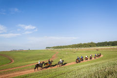 Race Horses Training Landscape Royalty Free Stock Photos