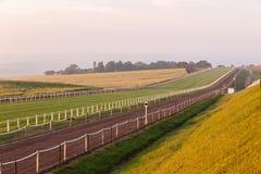 Race Horses Training Landscape Royalty Free Stock Photo