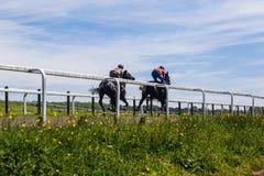 Race Horses Training Landscape. Race horses jockeys training runs morning blue sky track landscape Royalty Free Stock Images