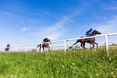 Race Horses Training. Race horses rider jockeys training morning blue sky closeup action Stock Photography