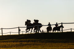 Race Horses Training. Race horses riders training running track action morning silhouetted landscape Stock Photo