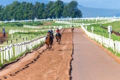 Race Horses Training Sand Track. Race horses grooms jockeys on training runs on sand track head on front view to camera lens Stock Image