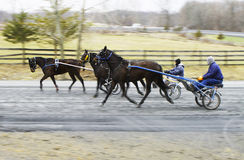 Race horses warming up Stock Photography