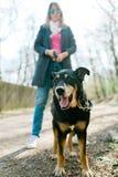 Race mélangée d'abri de chien sur la promenade dans forrest - conclusion de la nouvelle maison photographie stock libre de droits