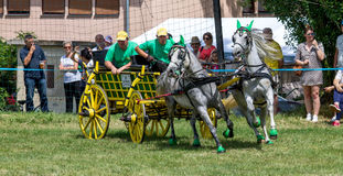 Race. The race of old horse-drawn carriages Stock Photos