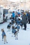 Race Preparations for the 2018 Yukon Quest. FAIRBANKS, ALASKA - FEBRUARY 3, 2018: Mushers prepare their dog teams for the start of the Yukon Quest Royalty Free Stock Image