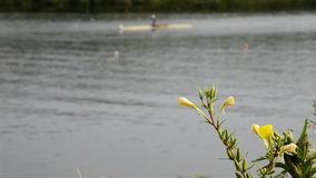 Race on rowing. Competition for water stadium. flowers in the foreground stock footage