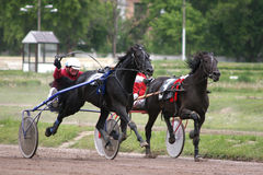 Race sport horses Stock Image