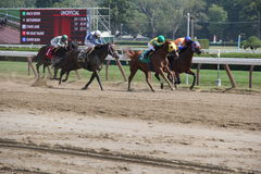Race to the finish line Saratoga Racetrack,New York,2015 Royalty Free Stock Image